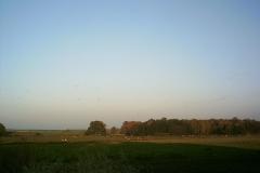 Kuhweiden