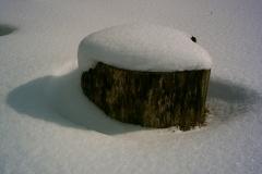 Verschwindender Baumstumpf